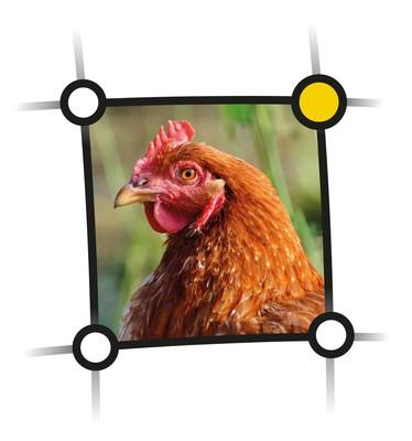 Externer Link zu den Veranstaltungen des Netzwerkes Fokus Tierwohl im Bereich Geflügel