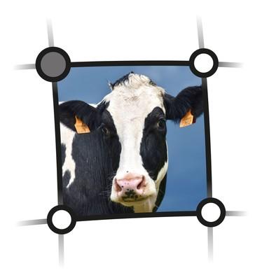 Externer Link zu den Veranstaltungen des Netzwerkes Fokus Tierwohl im Bereich Rind