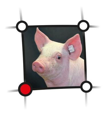 Externer Link zu den Veranstaltungen des Netzwerkes Fokus Tierwohl im Bereich Schwein